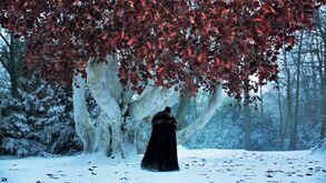 Jon Godwood Tree S8