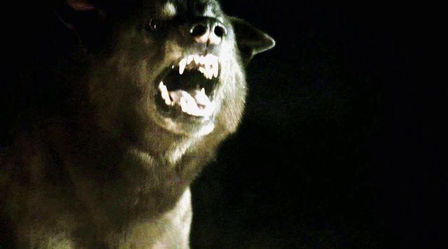 Cão Felpudo