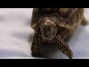 Gamera_the_Brave_(2006)_-_Trailer