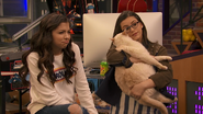 Babe, Kenzie and her cat