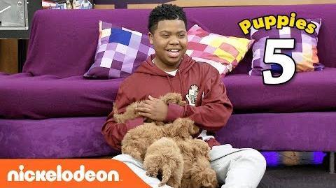 The Cute Puppy Challenge 🐶 w Benjamin Flores Jr