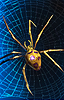 Dire Spider.png