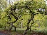Rambling Woods