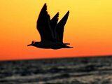 Three-Winged Bird