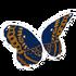 Artistic Butterfly Wings