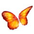 Fire Butterfly Wings