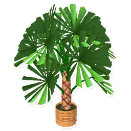 Large Fan Palm