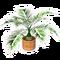 Short Palm