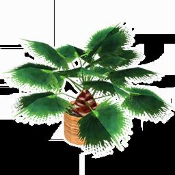 Short Fan Palm