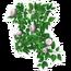 White Rose Trellis