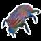 Beetle Rainbow 2