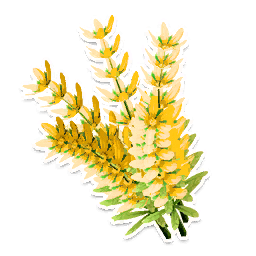Yellow Lavender