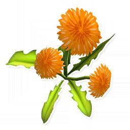 Orange Dandelion