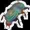 Beetle Rainbow 1