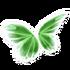 Light Green Butterfly Wings