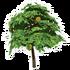 Lemon Tree Mature.png