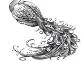 Colibri Lunaire