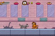 GAHNL Alley Cat 1