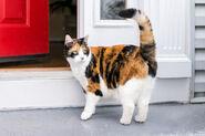 247259-1600x1066-gato-calico-afuera