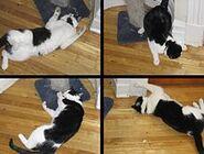 220px-Catnip-effects
