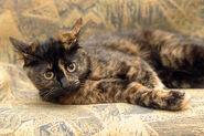 Gatos-carey-