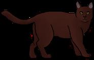 Musaraña.guerrera