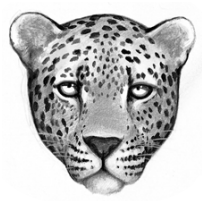 Logo-leopardclan.png