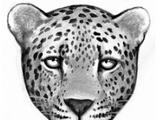Clan del Leopardo