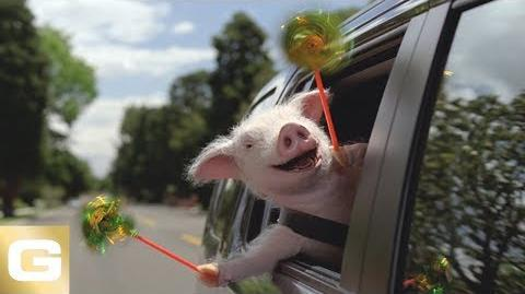 Little Piggy | Geico Wiki | Fandom
