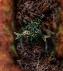 Rune of Heal.png