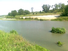 none Vedea River in 2011, near Peretu, Teleorman