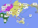 Human mitochondrial DNA haplogroup