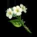 Предмет Цветок цинсинь.png