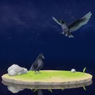 Wildlife Crow Archive