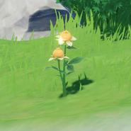 Item Sweet Flower Wild