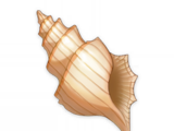 Mysterious Conch