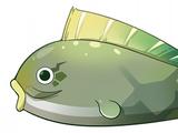 Bitter Pufferfish