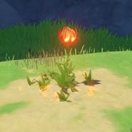 Item Flaming Flower Stamen Wild Intact