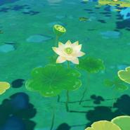 Item Lotus Head Wild