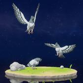 Wildlife Graywing Pigeon Archive