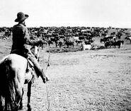Tending herd deansvillew