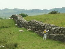 800px-Hadrians Wall with Weedkiller.JPG