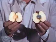 Apple-recorder