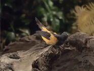 Bird-bomb