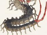 Colossal Centipede