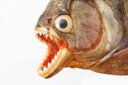 Uglyfish.jpg