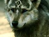 Rethalwolf