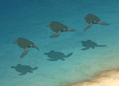 Grüne Schildkröten