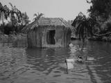 Communal Hut