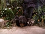 Black Morning Spider